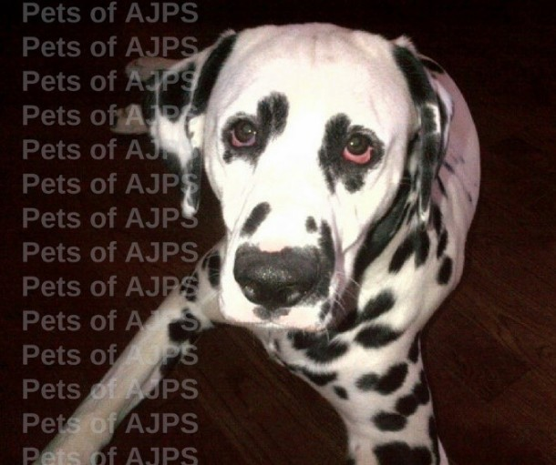 AJPS-Monty