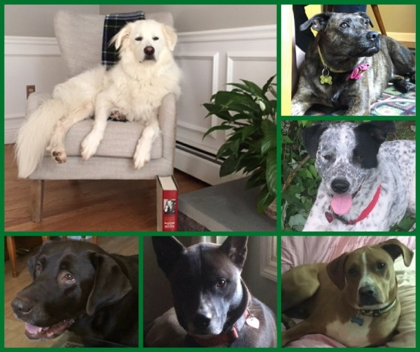 AJPS-SupportPups-Collage